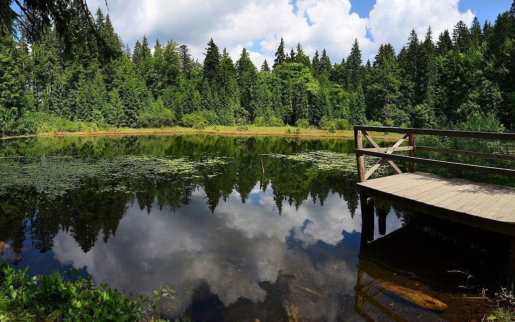 Écologie : une philosophie de l'environnement